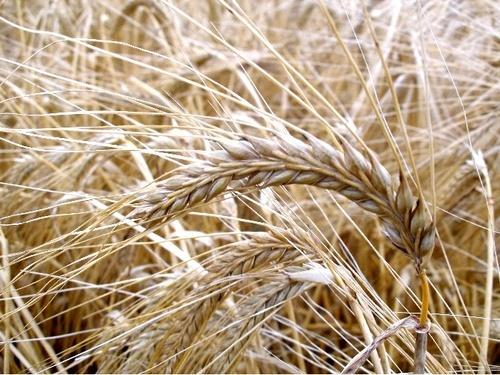 Harvest by takethemoment