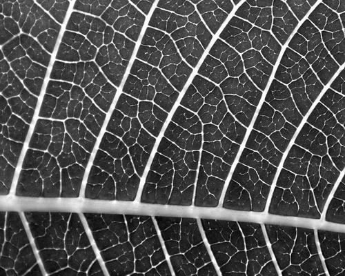 Leaf by bengsays
