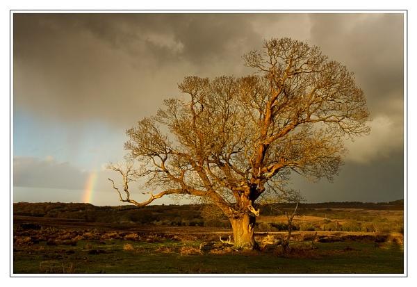 sunshine & showers... by hayleyk