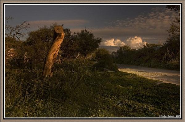 Stump by BertC