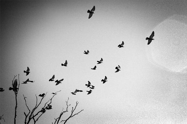 The Birds by becca_cusworth