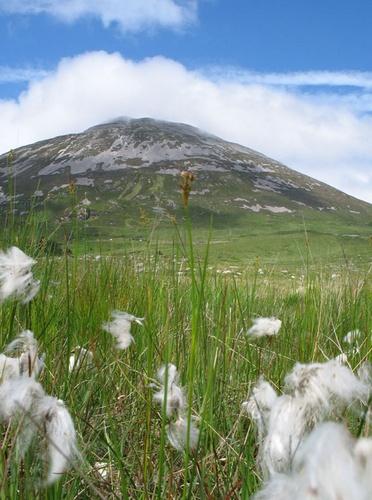 Bog Cotton & Errigal by Declanworld
