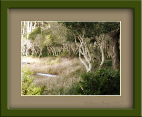 Coastal Trees by bbruno