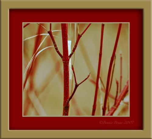 Red-Twig Dogwood by bbruno