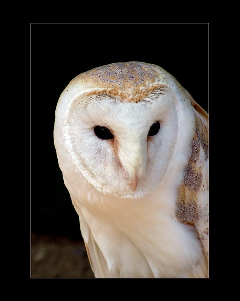 Owl by nordical