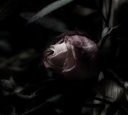 Send Me Dead Flowers