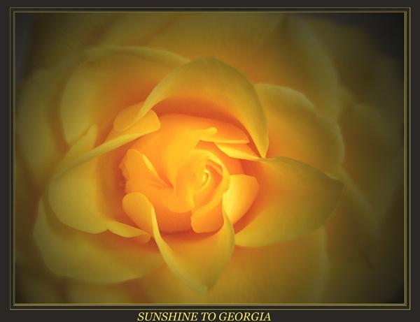 SUNSHINE TO GEORGIA.......... by thorn