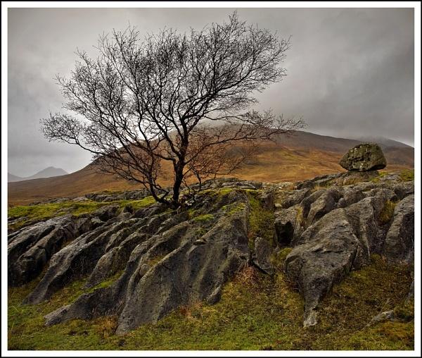 Skye tree... by Scottishlandscapes