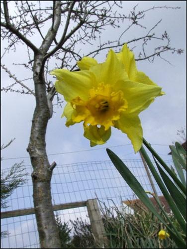 Spring by mr_dave