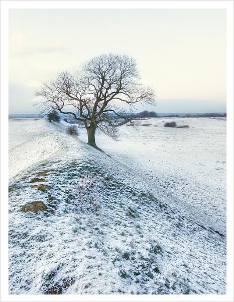 lone tree 2 by msnapz