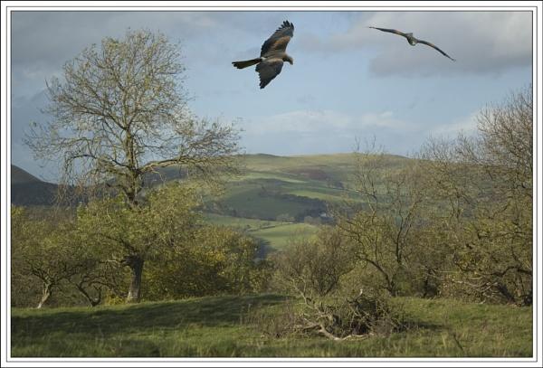 Kites Away! by geniehawk