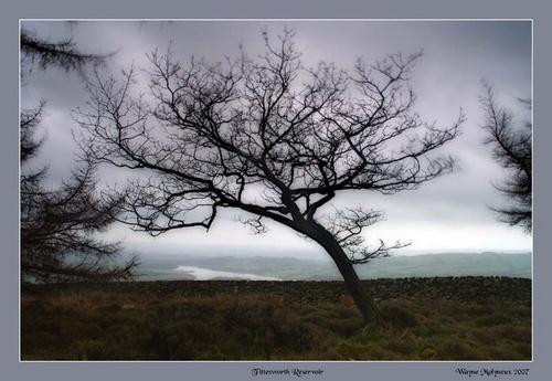 Tree above Tittesworth Reservoir by waymol