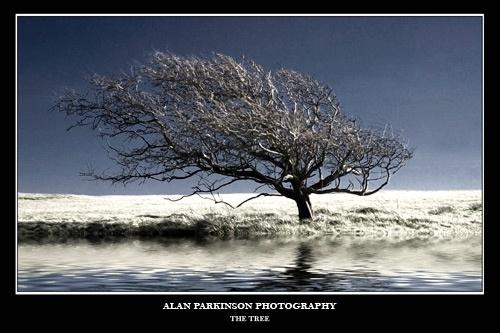 THE TREE by alzeepark