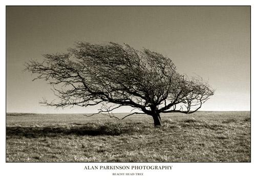 The Tree II by alzeepark