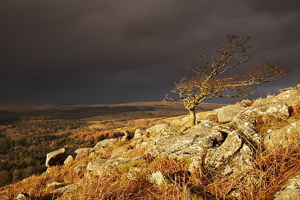 The Hawthorn on the Tor by mattw
