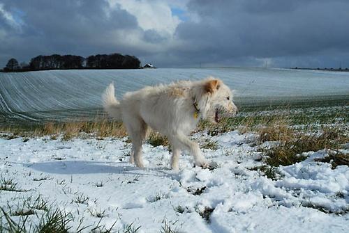 Kasper\'s First Snow by jimthistle73