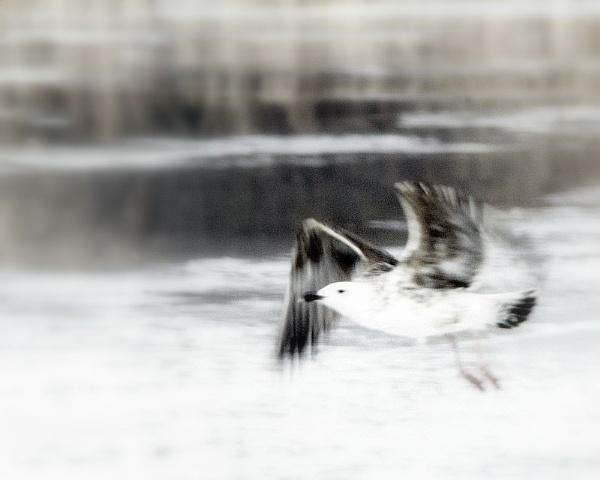 gull dreams by sputnki