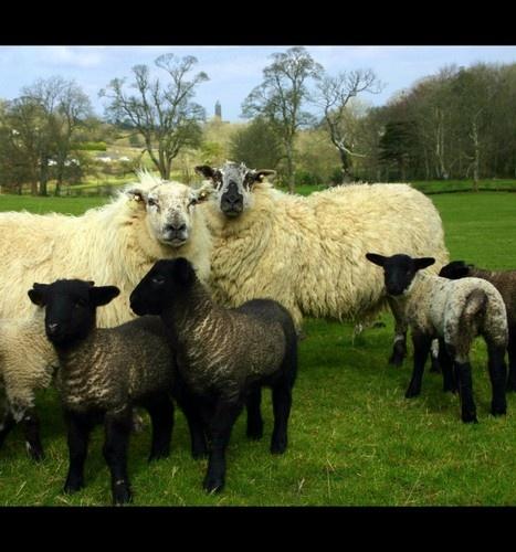 Spring Lamb by beavis