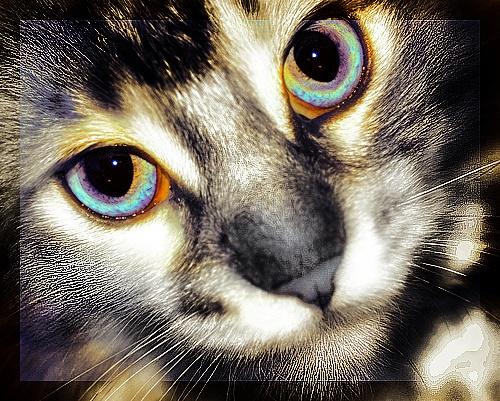 Kitten by kaybee