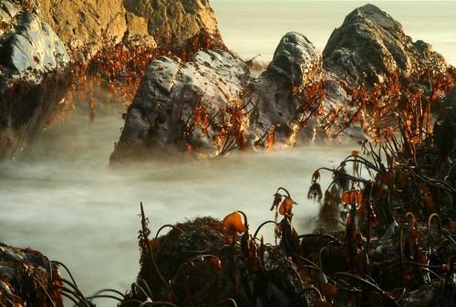 Seascape by Gomez