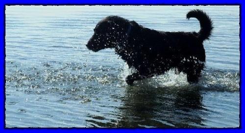 Splash by Ridgeway