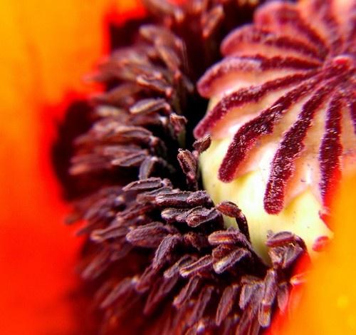 poppy by Moofie
