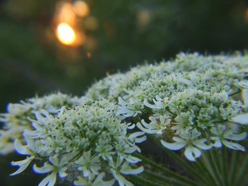 warm evening by Moofie