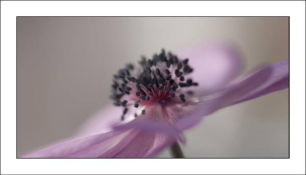 A Little Bit Pink by jeanette