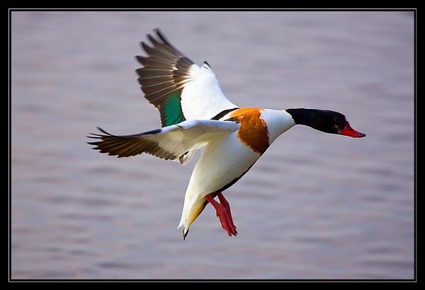 Duck! by kwaterworth
