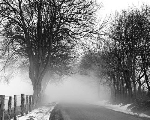 Foggy Farm Road by gmontambault