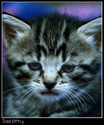 Sad Kitty by Deego