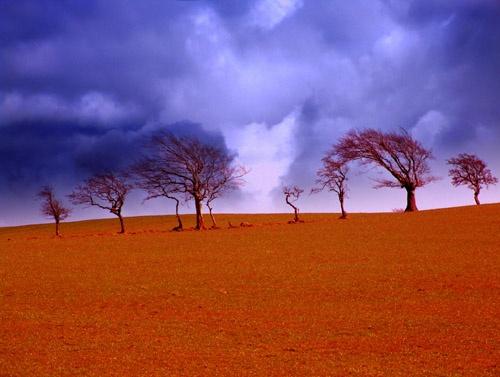 Moody trees by Juliet