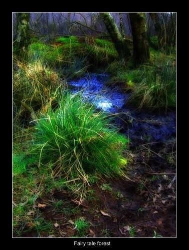 Fairy tale forest by Juliet