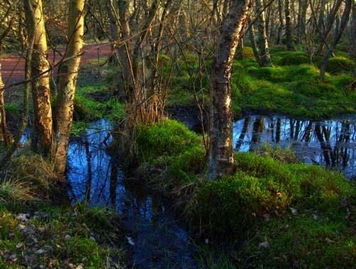 Fairy tale forest 2 by Juliet