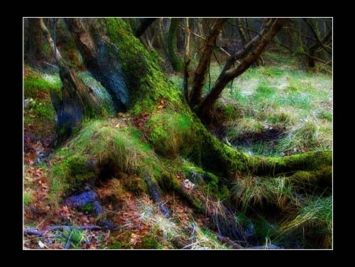 Fairy tale forest 3 by Juliet