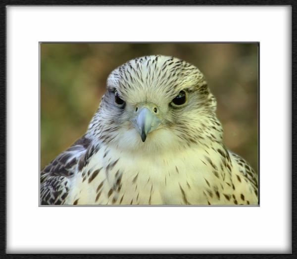 ~ Eagle Eyes ~ by KKmoments