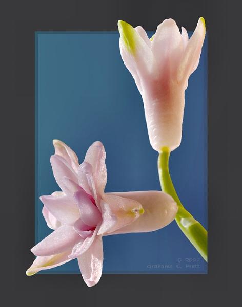 Gentle senior Hyacinth by 19Grumpah42