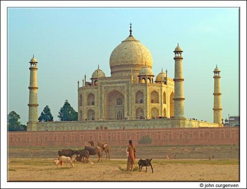 Grazing by the Taj by Gorro