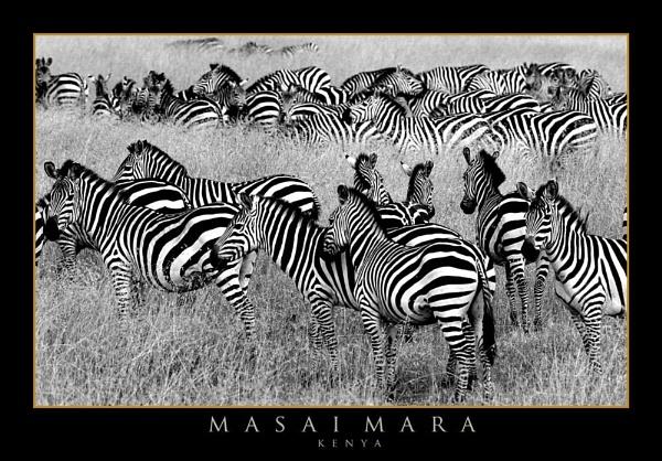 Masai Mara by RobDougall