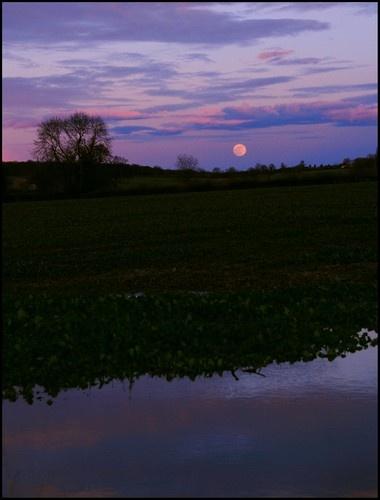 Moon Rise by tavm