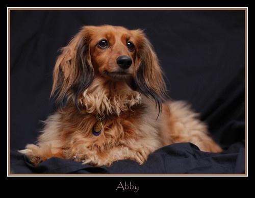 Abby by tavm