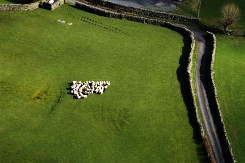 sheep by sepulturek