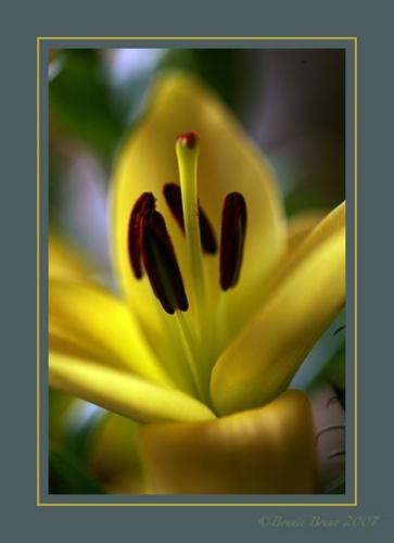 Spring Fully Sprung by bbruno