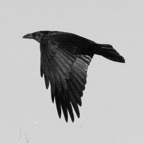 Raven by KenJ