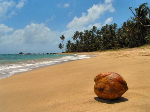 Corn Island Coconut by Adam_1976