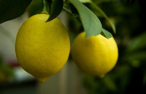 Lemons by snoops
