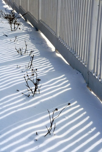 Shadow  in Winter by manicam