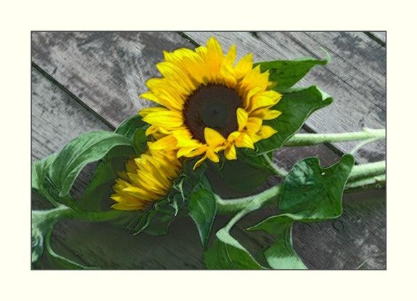 Sunny Flower by starliz