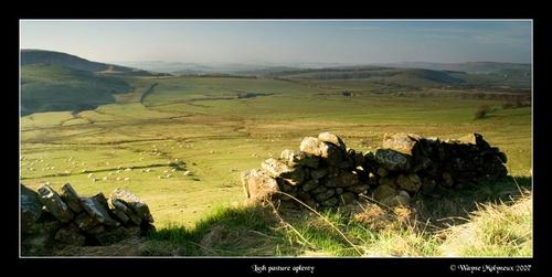 Pastures aplenty by waymol