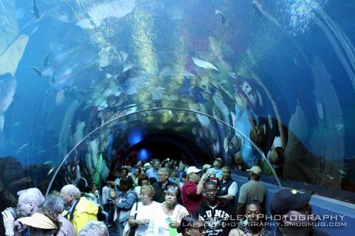 Sea Tunnel by deelaps07